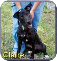 Labrador Retriever Mix Dog for adoption in Aldie, Virginia - Claire