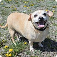 Adopt A Pet :: Eddie - Aurora, CO