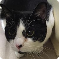 Adopt A Pet :: Henrietta - Granby, CO