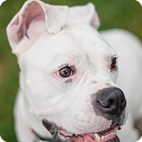 Adopt A Pet :: Pearl - Richmond, VA