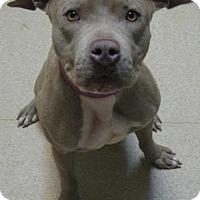 Adopt A Pet :: Mya - Gary, IN