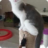 Adopt A Pet :: Vulcan - North Highlands, CA