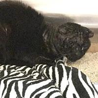 Adopt A Pet :: Hank - Santa Paula, CA