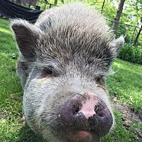 Adopt A Pet :: Cleveland - Beachwood, OH