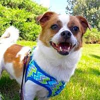 Adopt A Pet :: Festus - Brownsboro, AL