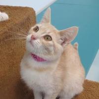 Adopt A Pet :: FRANCESCA - Mt. Shasta, CA