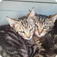 Adopt A Pet :: Trey - Vacaville, CA