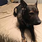 Adopt A Pet :: Osiris 5341