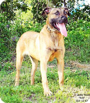 Shepherd (Unknown Type)/Hound (Unknown Type) Mix Dog for adoption in St. James, Missouri - Rob