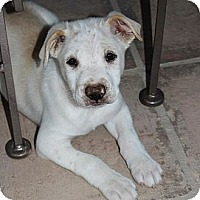 Adopt A Pet :: Finn - Mesa, AZ