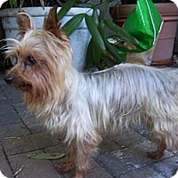 Adopt A Pet :: Emmitt - CAPE CORAL, FL