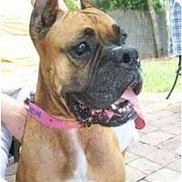 Adopt A Pet :: Jezebel - Brunswick, GA