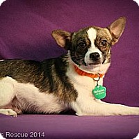 Adopt A Pet :: LOL - Broomfield, CO