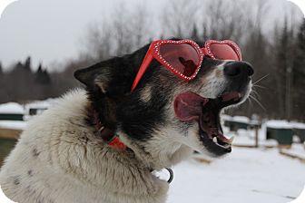 Husky Mix Dog for adoption in Jefferson, New Hampshire - Reba