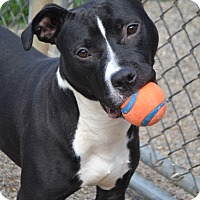 Adopt A Pet :: Lansing - Toledo, OH