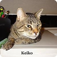 Adopt A Pet :: Keiko - Bentonville, AR