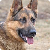 Adopt A Pet :: Arie - Hamilton, MT