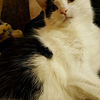 Adopt A Pet :: Rocky - Clarkson, KY