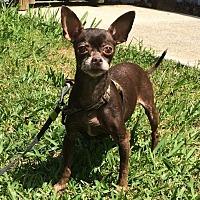 Adopt A Pet :: Dora - Acworth, GA