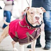 Adopt A Pet :: Lucas - Whitestone, NY