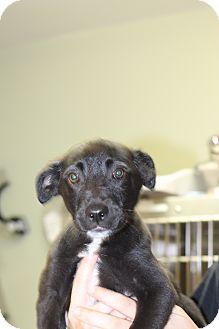 Mixed Breed (Medium) Mix Puppy for adoption in Covington, Louisiana - Pasteur