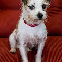 Adopt A Pet :: Jenna - Miami, FL