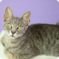 Adopt A Pet :: Baby G - Baton Rouge, LA