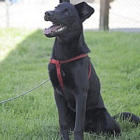 Adopt A Pet :: Buckley - Woodburn, OR