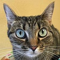 Adopt A Pet :: Trixie II - Auburn, CA