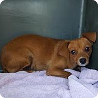 Adopt A Pet :: Lady Liberty - Fresno CA, CA