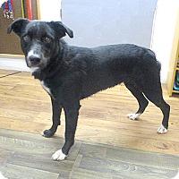Adopt A Pet :: 17-d07-002 Hannah - Fayetteville, TN
