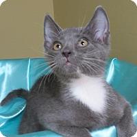 Adopt A Pet :: Langston - St. Louis, MO