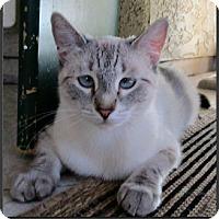 Adopt A Pet :: Elsie - Gilbert, AZ