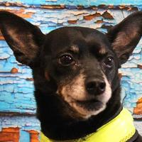 Adopt A Pet :: Bob - In Foster - Elkhorn, WI