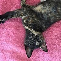 Adopt A Pet :: Regina - Hollywood, MD