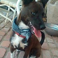 Adopt A Pet :: Boy w/ Blue Eye aka Frankie - Apple Valley, CA