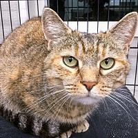 Adopt A Pet :: Irma - Webster, MA