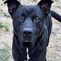 Adopt A Pet :: Leo - Grants Pass, OR