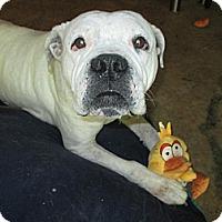 Adopt A Pet :: Mona Leeta - Apex, NC