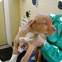 Adopt A Pet :: Gertrude - Crawfordville, FL