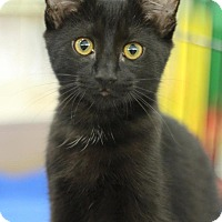 Adopt A Pet :: Blu - Sacramento, CA