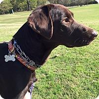 Adopt A Pet :: Buddy TN - Cumming, GA