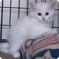 Adopt A Pet :: FAYZA - Acme, PA