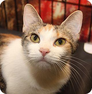 Calico Cat for adoption in Marietta, Ohio - Thelma (Spayed)
