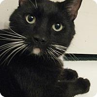 Adopt A Pet :: MITCH - Brea, CA