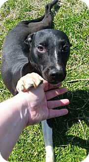 Terrier (Unknown Type, Medium) Mix Dog for adoption in Cleveland, Mississippi - PEEWEE