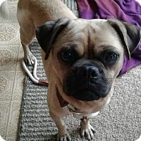 Adopt A Pet :: Walter - New Oxford, PA