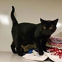Adopt A Pet :: C-15 - Indianola, IA