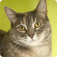 Adopt A Pet :: Celeste - Chicago, IL