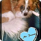 Adopt A Pet :: Mr. Peanut Adopiton pending